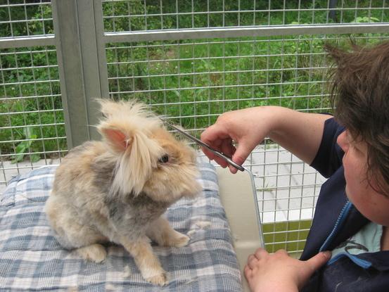 Dierenkapsalon Hoevelaken, trimsalon voor honden en konijnen
