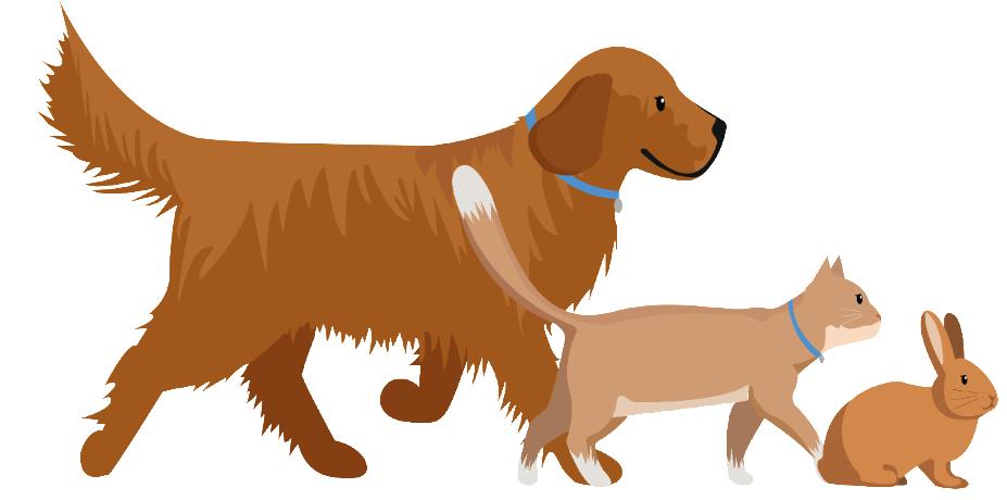 Dierenkapsalon Hoevelaken, trimsalon voor honden, katten en konijnen.